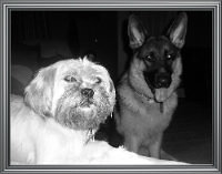 Ridgewood Dogs