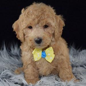 Dog Grooming Ridgewood Ny