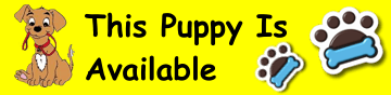 this-puppy-is-available