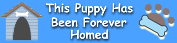 boston mixed puppy adoptions in MD